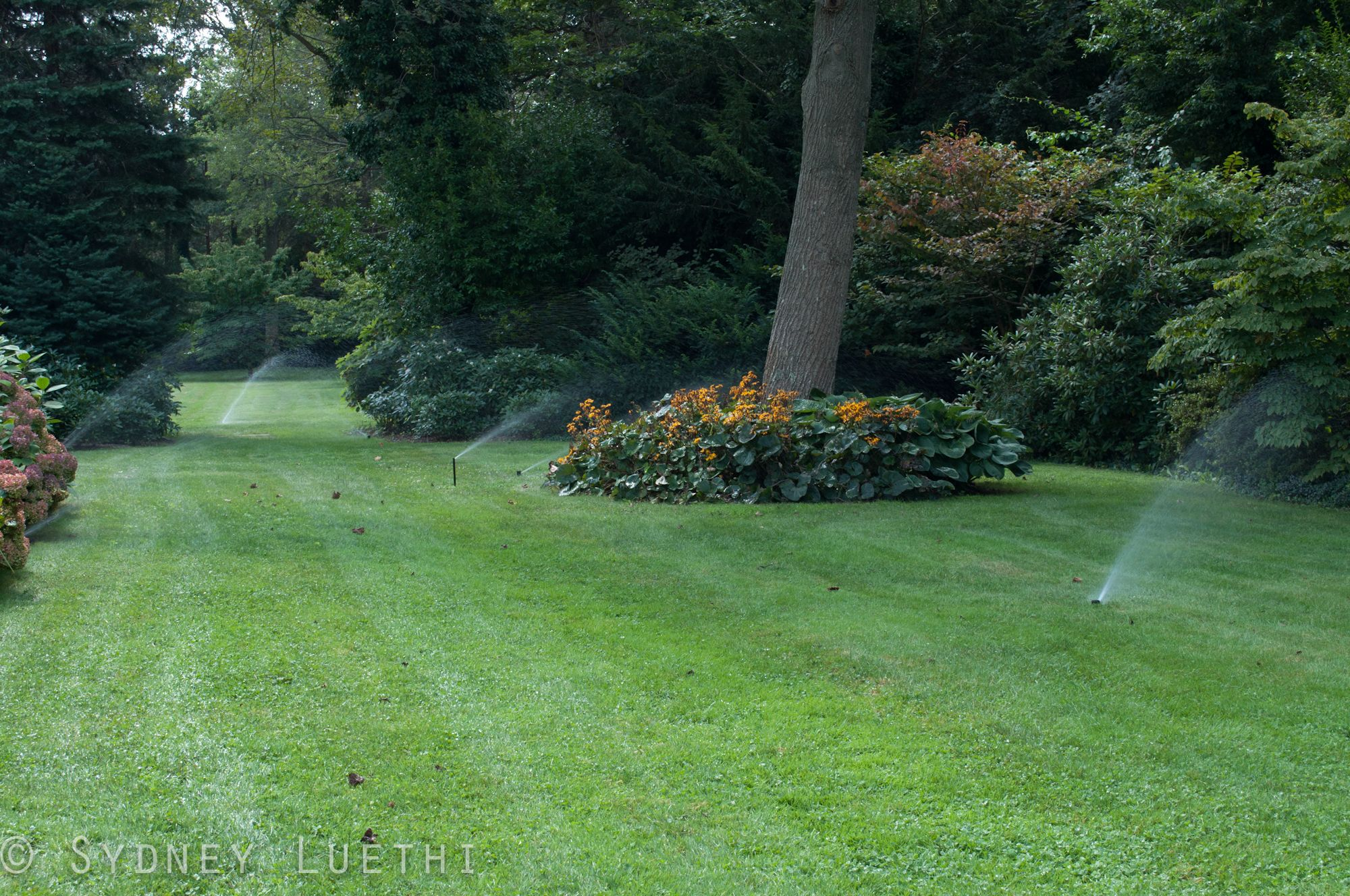 How long and how often should i water lawn care lawn