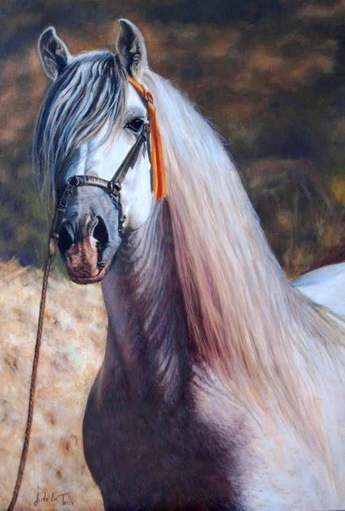 Galeria de imagenes y fotos de los caballos mas hermosos | Fotos de ...