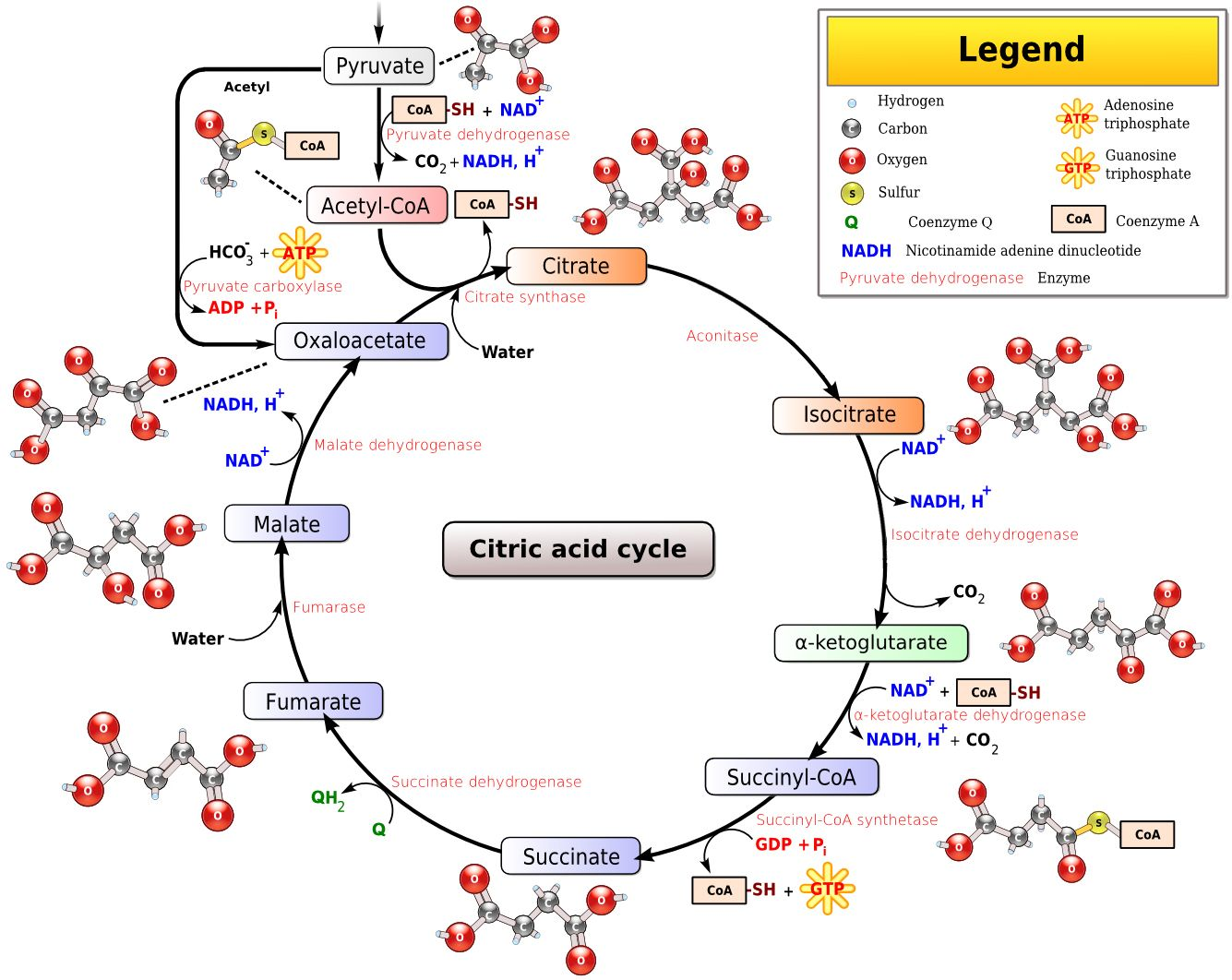 Pin On Enzymes Catalysis Regulation