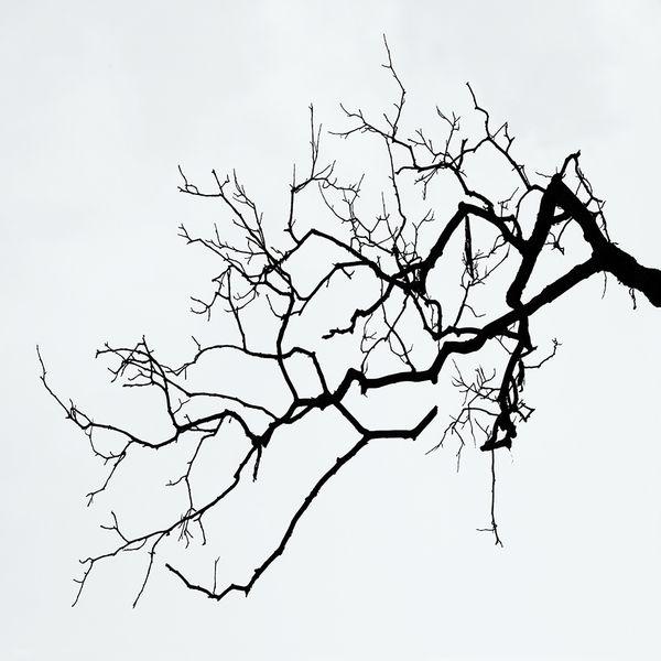 Old Branch / Paul Jett / archival pigment print; photograph / Art ...