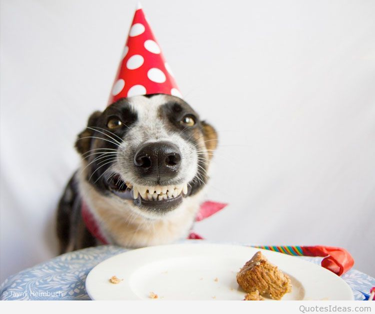 Smiling Dog Birthday Wish Google Search Birthday Meme Dog