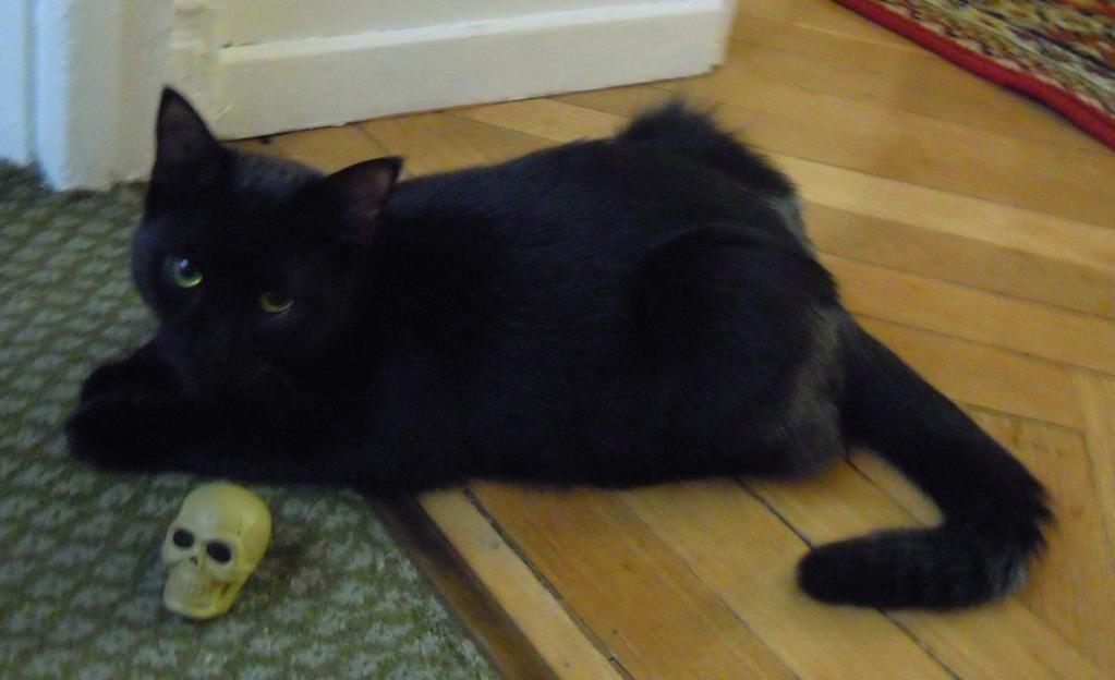 Éste es Loki, uno de los dos diosecillos que me adoptaron el día que mi adorado Bruno me dejó. Es tan travieso como su nombre indica...