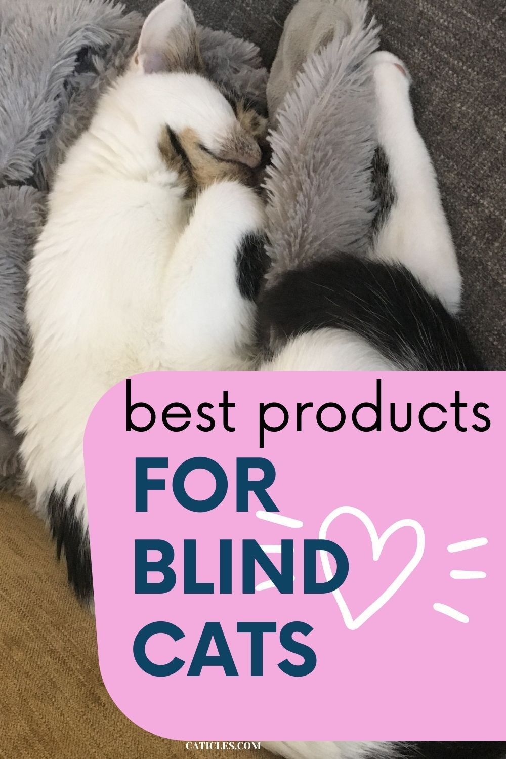 Best Products For Blind Cats And Care Tips From A Cat Pro Caticles Cat Care Cat Problems Cat Care Tips