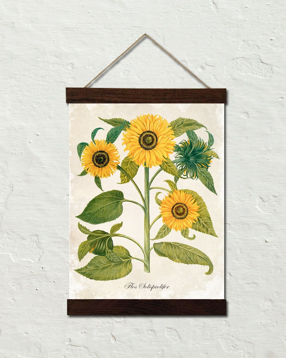 Antique French Botanical Sunflower No. 6 – Canvas Wall Hanging ...