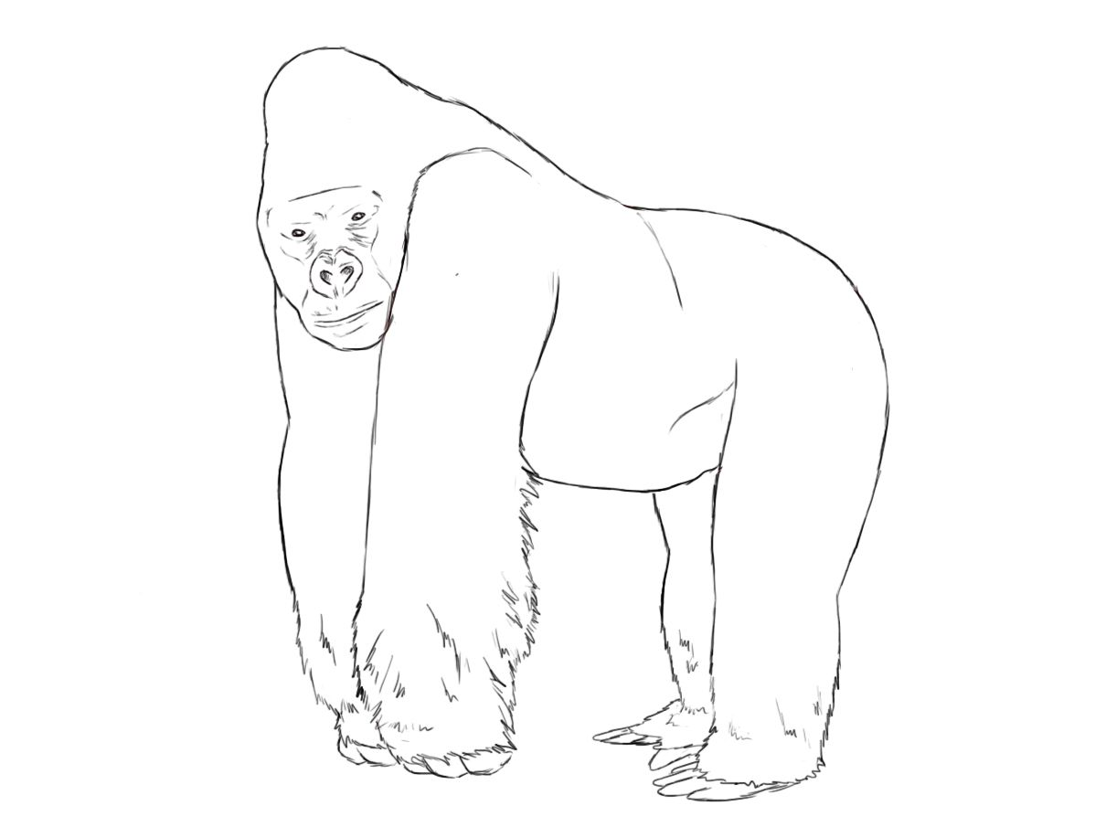 Coloring pages gorilla - How To Draw A Gorilla