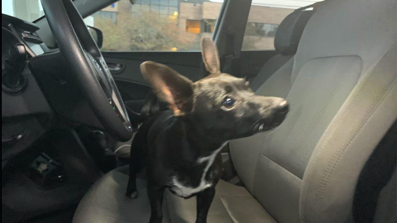 Louisiana Dog Shifts Suv Into Reverse Causing It To Back Across