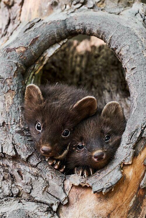Pin by Mikki Williams on Respect Life Wildlife