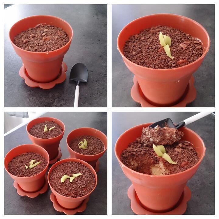 Dronning Mauds dessert som jeg har fylt små blomsterpotte. Små spader som en kan spise med. Litt grønt marsipan slik at det ser ut som noe gror