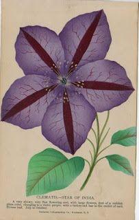 Catskill Paper: Antique Botanical Prints