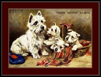 English Picture West Highland Terrier Dog Puppy Art | eBay
