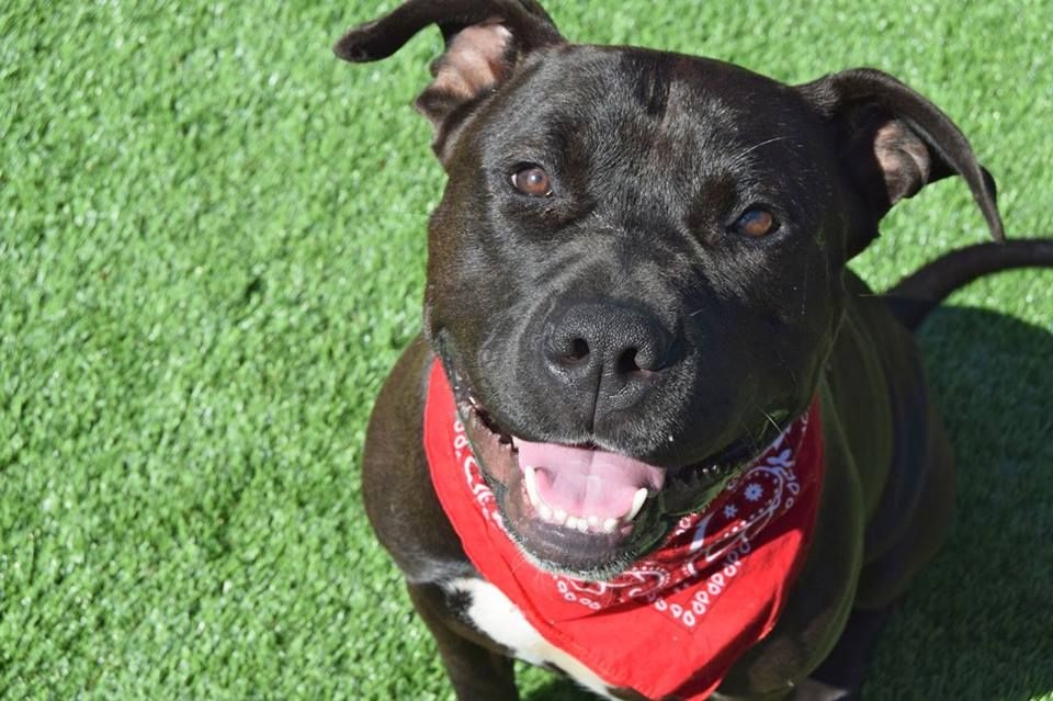URGENT! PLACEMENT NEEDED BY 7PM TUESDAY 5/19! KANE A473467