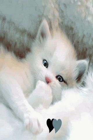 White Cute Love Kitty Iphone Wallpaper Mobile Wallpaper Kittens