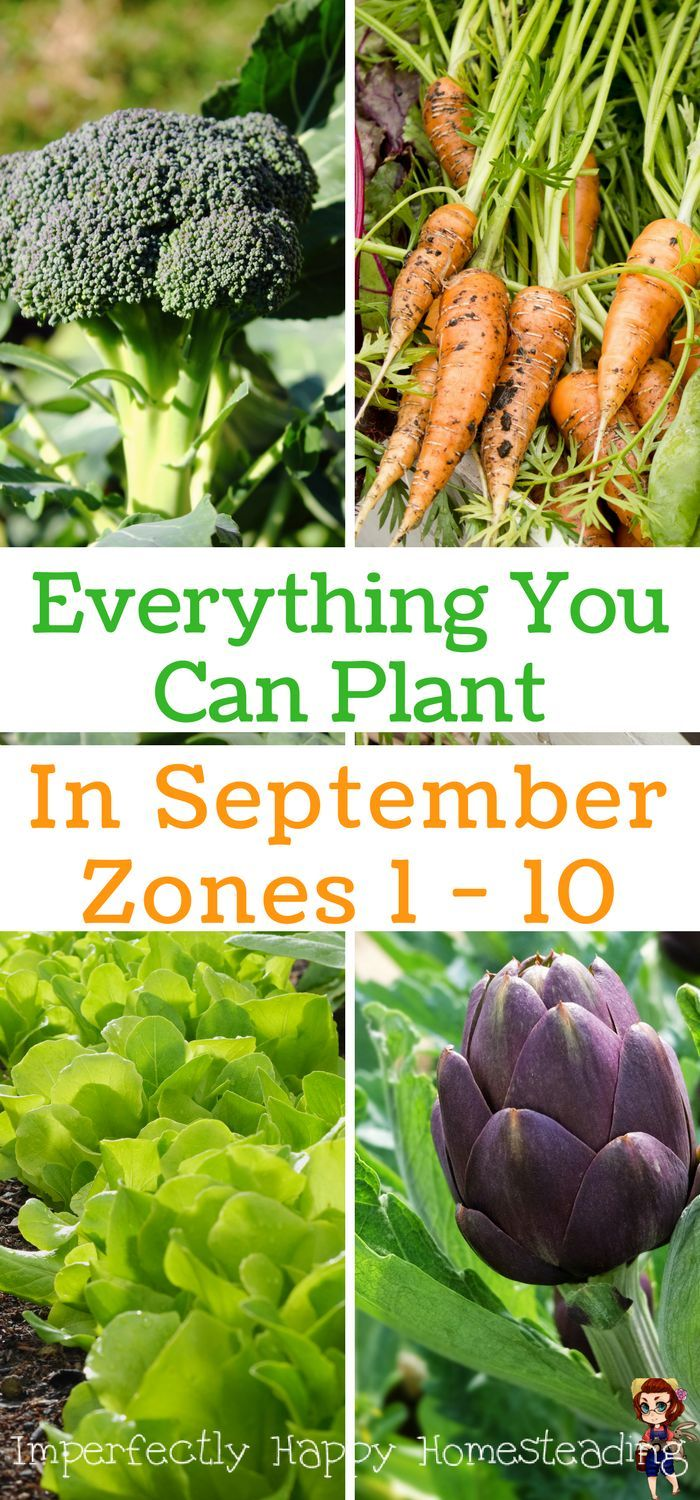 Everything You Can Plant In September For Zone 1 2 3 4 5 6 7 8 9 And 10 Your Fall Vegetable Garden