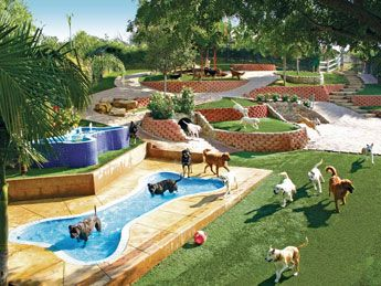 Disneyland for dogs!? This place looks like doggy heaven ...