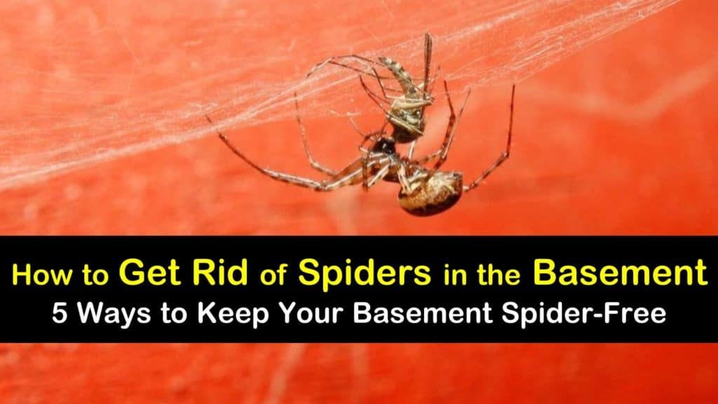 How To Get Rid Of Spiders In Window Wells
