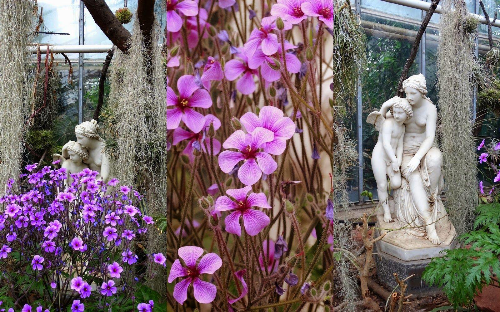 Flora Botanischer Garten Koln With Images Kolonia