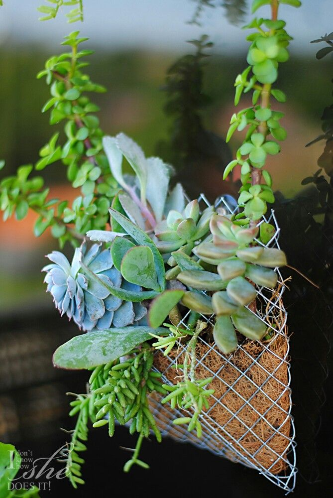 No Space For Container Gardening? No Worries! Keep A Few Simple Succulents  Around With This Cute Pocket Wall Planteru2014such A Clever Idea By Gloribell  Lebron.