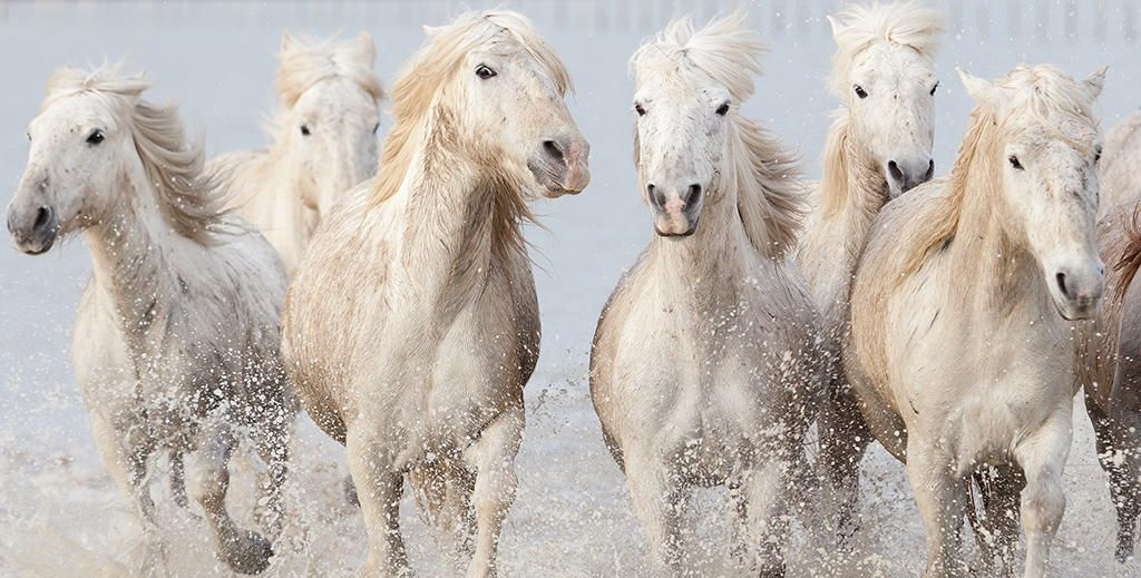 running wild horses by Marco Carmassi on 500px