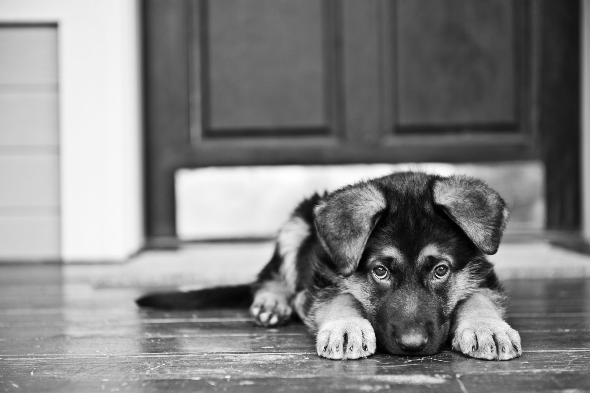 грустная картинка щенка детальном