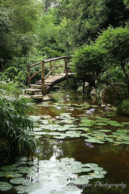Gardens: Japanese At Zilker Botanical Gardens, Austin, Texas, USA.