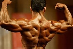 back muscles  workout routine for men back and bicep