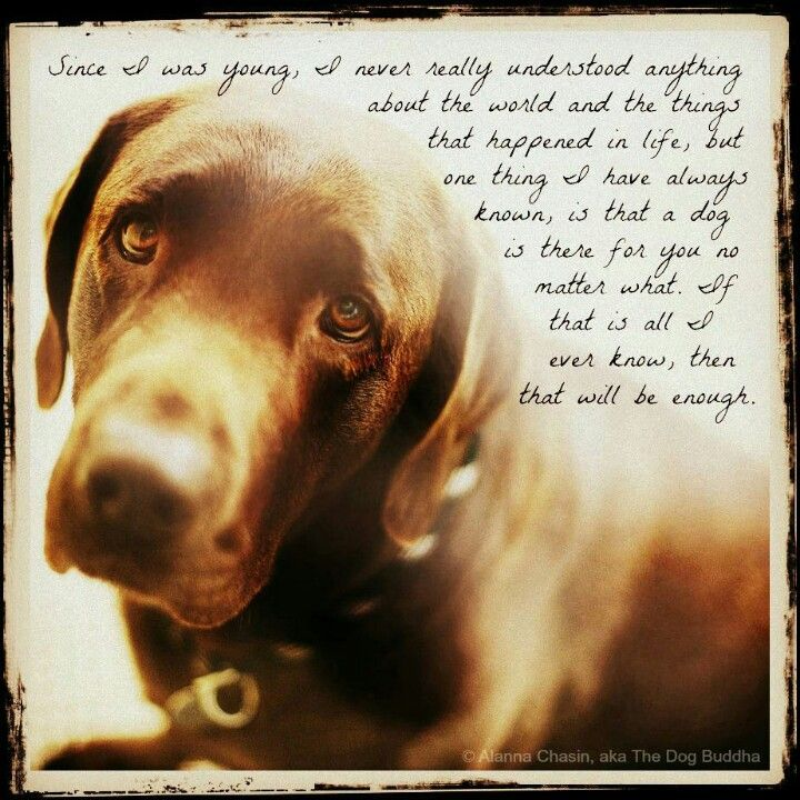 From the dog Buddha
