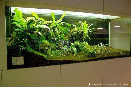 Image From Http I00 I Aliimg Com Photo V0 106532098 Corner Vivarium Jpg Vivarium Aquascape Aquarium Large Terrarium
