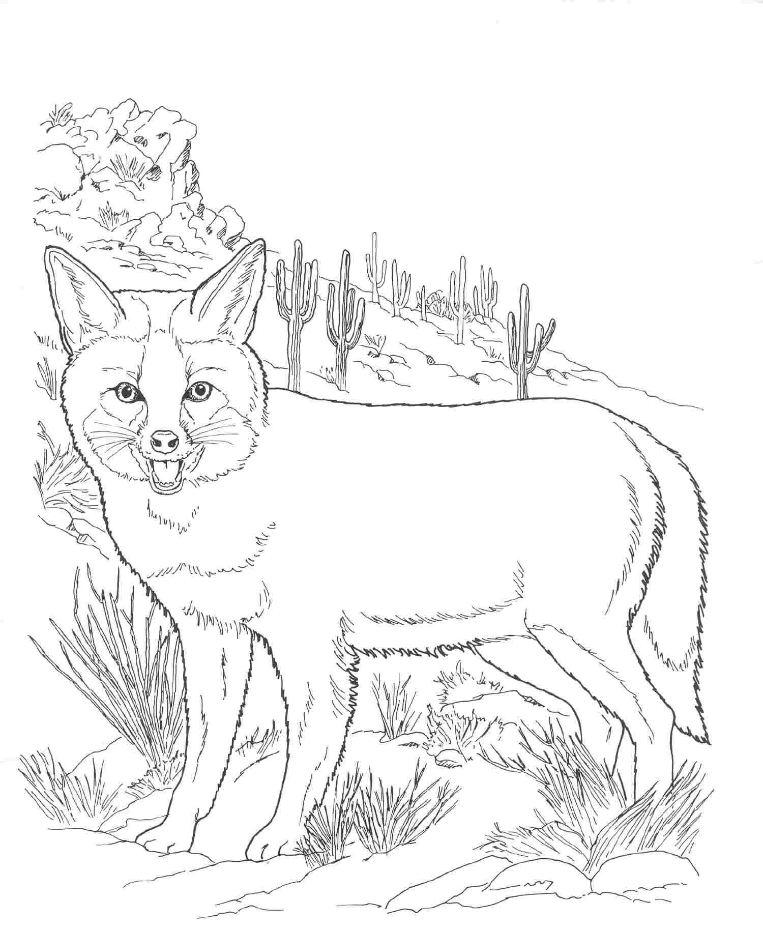 Animals On Free Printable Coloring Pages Fox Coloring Page Desert Animals Coloring Animal Coloring Pages