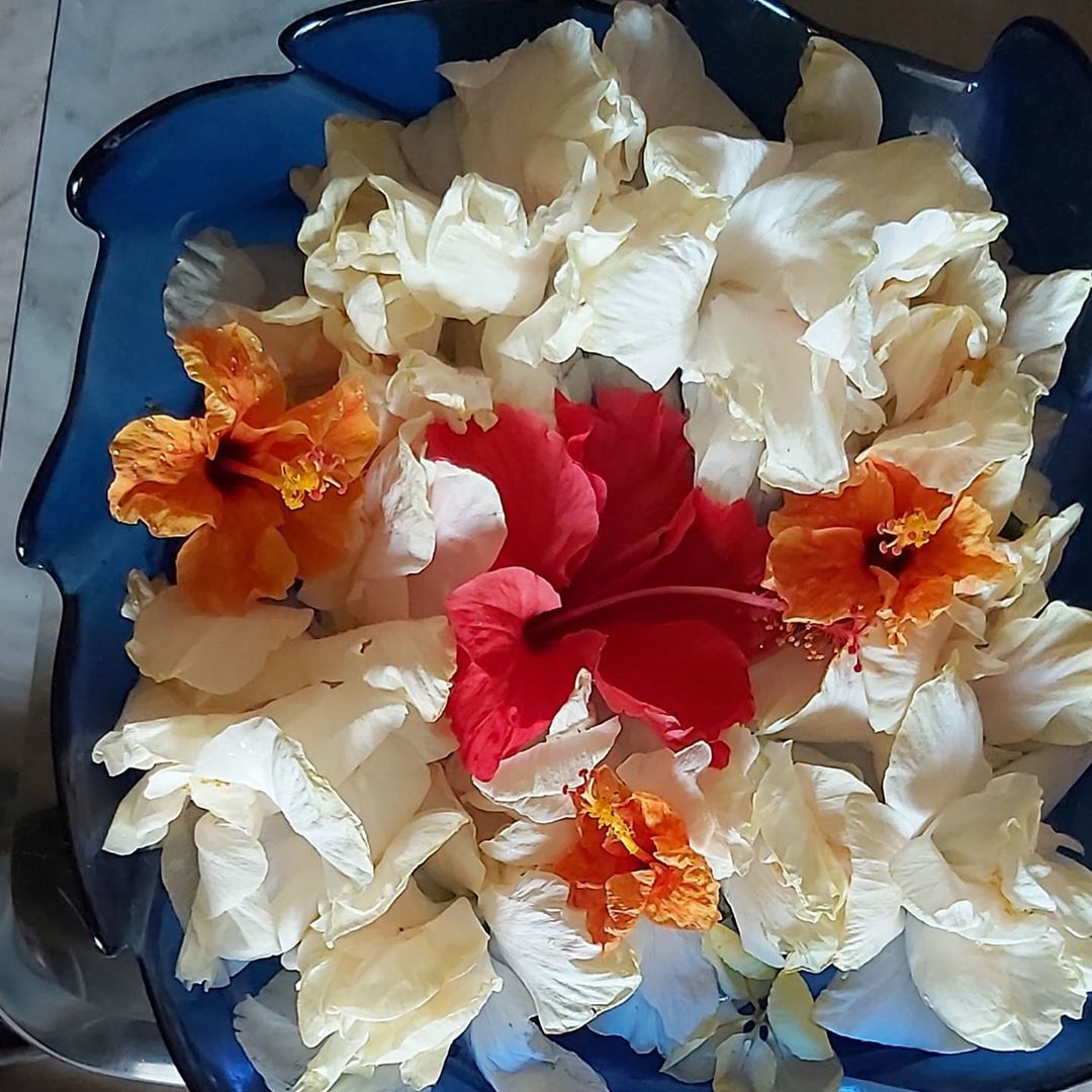 81961d3a016d72ab2dbf5e80ae31f5de - Carmine's Florist Palm Beach Gardens