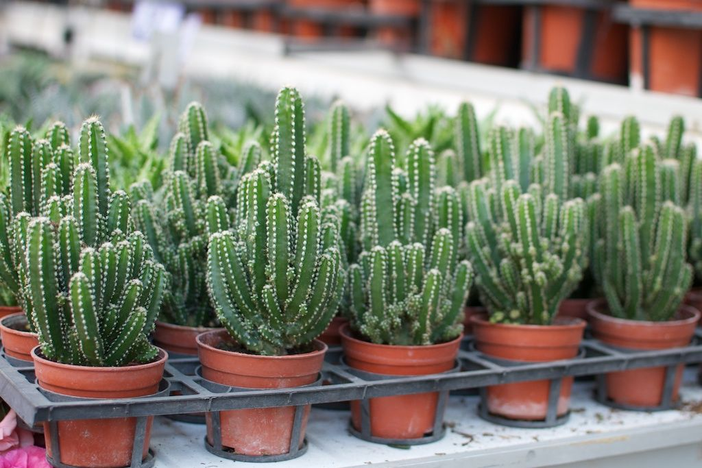 How to Care for Your Succulents Succulents, Cactus