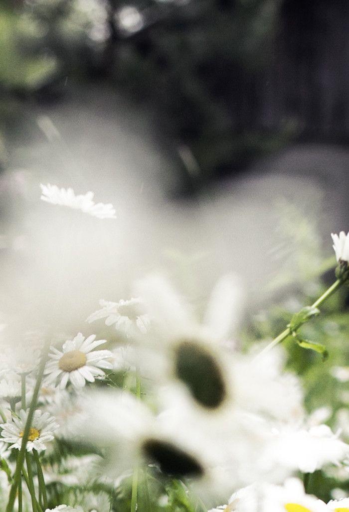 Suvi sur le vif - Blogi | Lily.fi