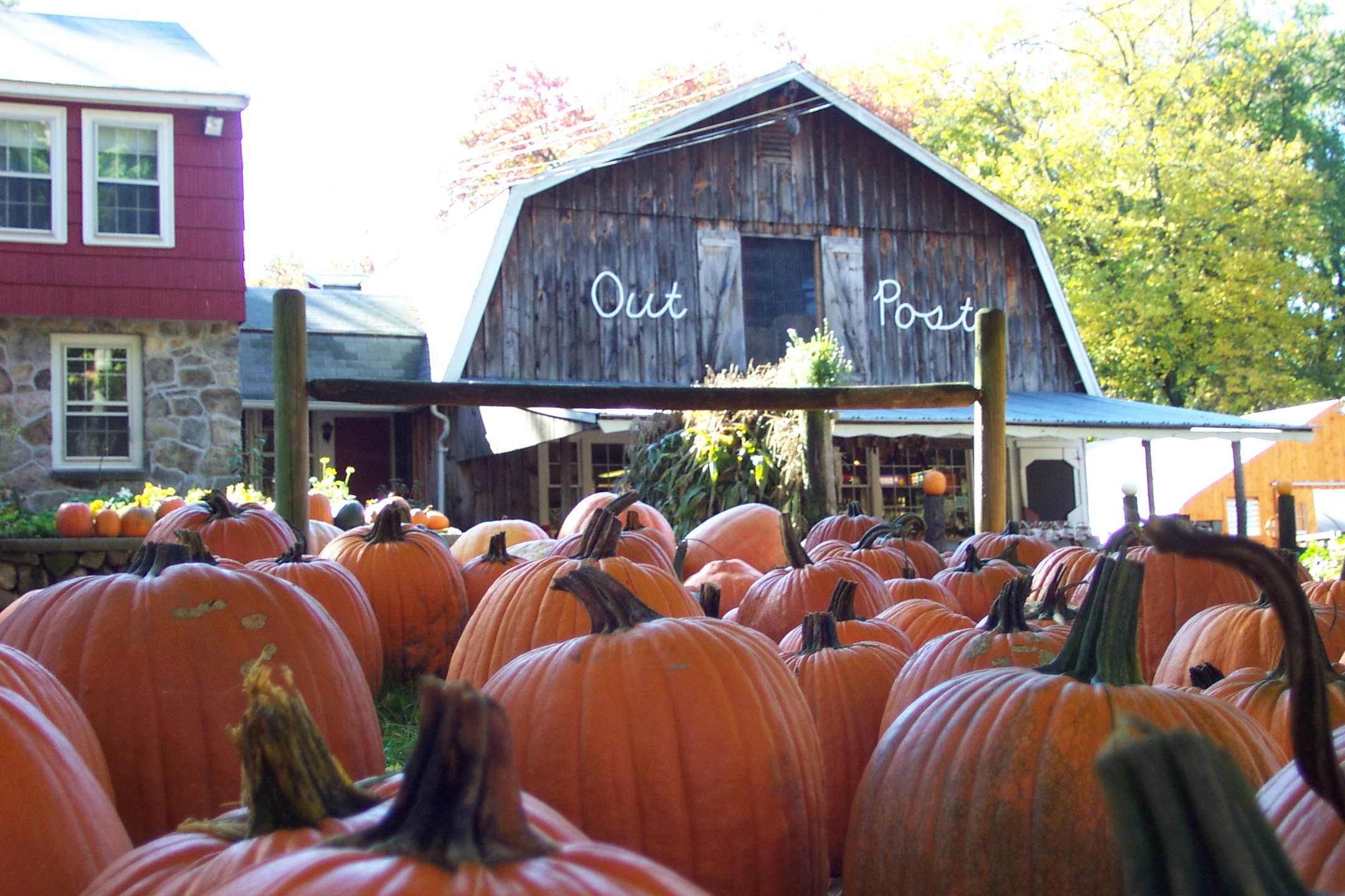 Love Their Turkey Sandwiches Outpost Farm Holliston Massachusetts In The Fall With Pumpkins Holliston Massachusetts Middlesex County Farm Massachusetts