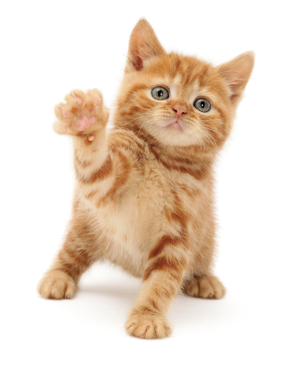 Waving cat Cats Protection Кошки