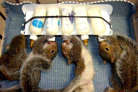 Awworthy Squirrels Funny Animals Cute Squirrel Cute Animals