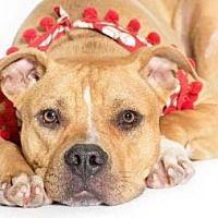 Oglesby, Illinois Boxer. Meet Benson, a for adoption