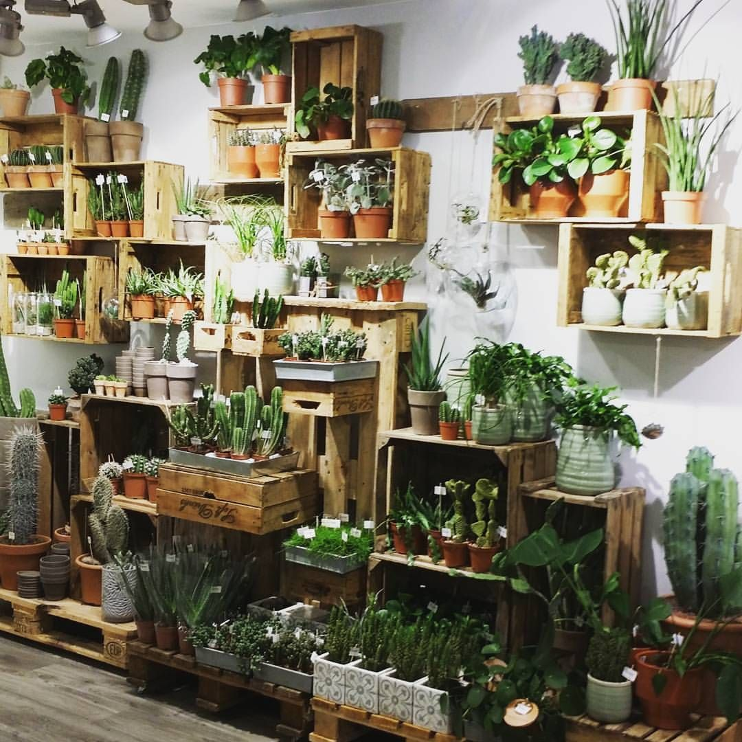 Indoor Plant Types Pin By Susan Bales On Floral Shop Design Pinterest