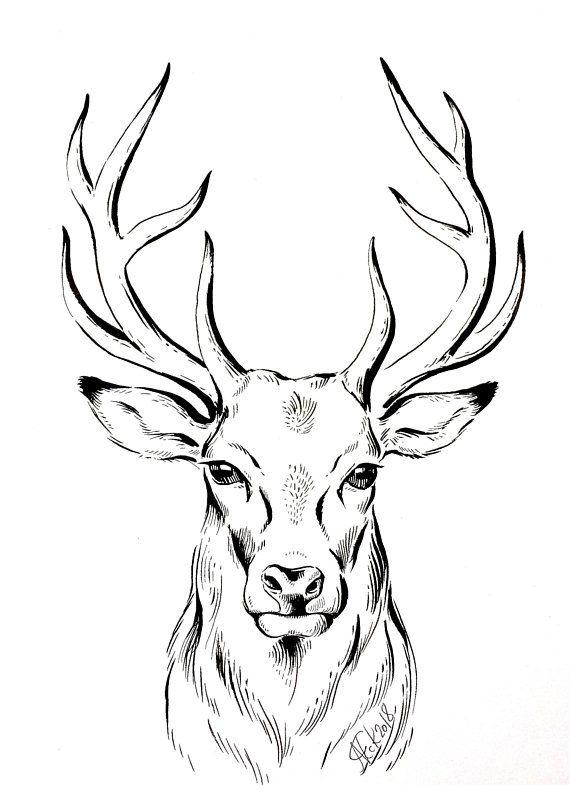 ORIGINAL Zeichnung Hirsch, minimalistische Zeichnung, Bild Tusche, deer ink drawing, stag line drawing , monochrome artwork