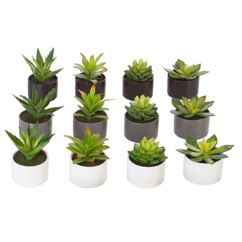 Plante Grasse Et Pot H 12cm Plantes Grasses Pots Et Grasse