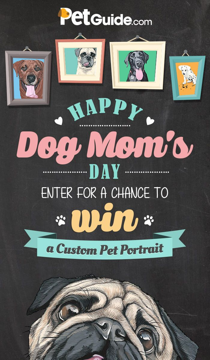 Happy Dog Mom's Day Contest | Pet Contests and Giveaways