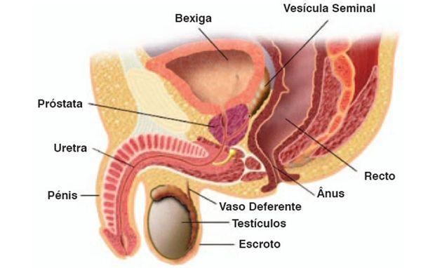 A retirada da prostata pode causar incontinência urinária. A fisioterapia pélvica ajuda a resolver este problema