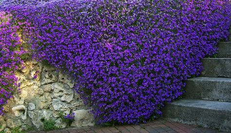 fiori perenni per giardino roccioso