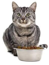 CAT FEEDING EQUIPMENTS CAT CARE