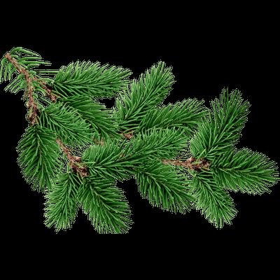 Pohozhee Izobrazhenie Picture Tree Christmas Leaves Fir Tree