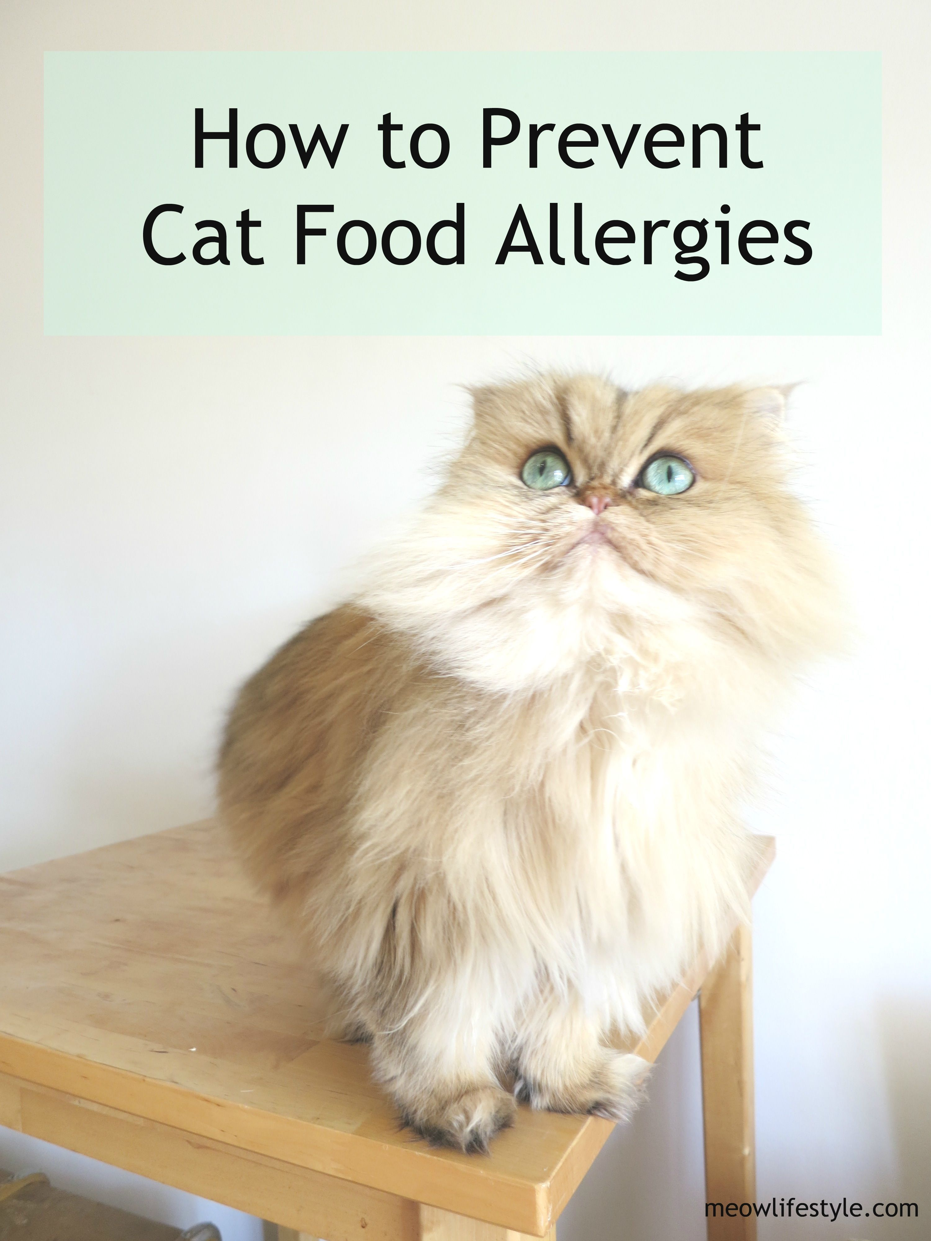 Prevent Your Cat From Developing Cat Food Allergies Before They Start Catcarefood Cat Food Allergy Cat Training Cats
