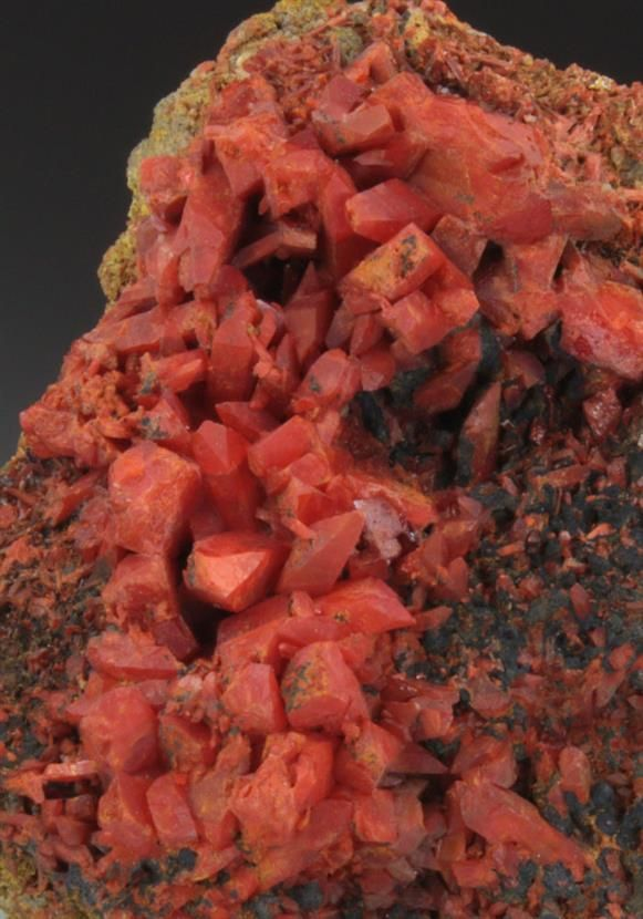 Crocoite, 	PbCrO4, Callenberg,  Chemnitz district, Saxony Germany. Crystals measure to 1cm+, displaying the characteristic steeply sloping termination. Associated with bright yellow to yellow-green Pyromorphite, and gray-black Mn-oxides, on a Quartz matrix