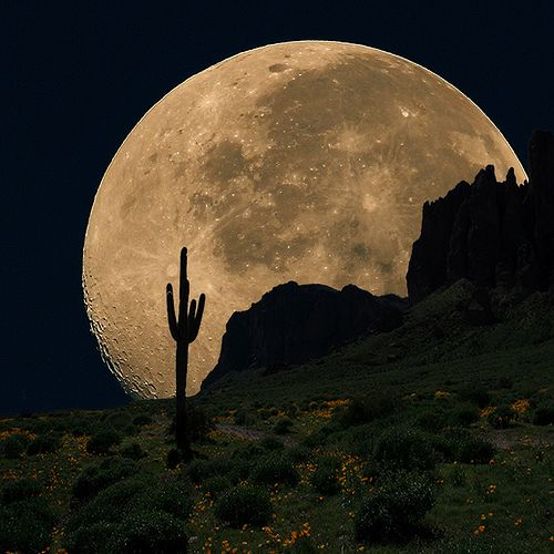 Coyote Moon   Flickr - Photo Sharing!