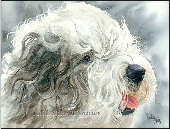 Old English Sheepdog Shepherd S Dog Akc Herding Pet Portrait