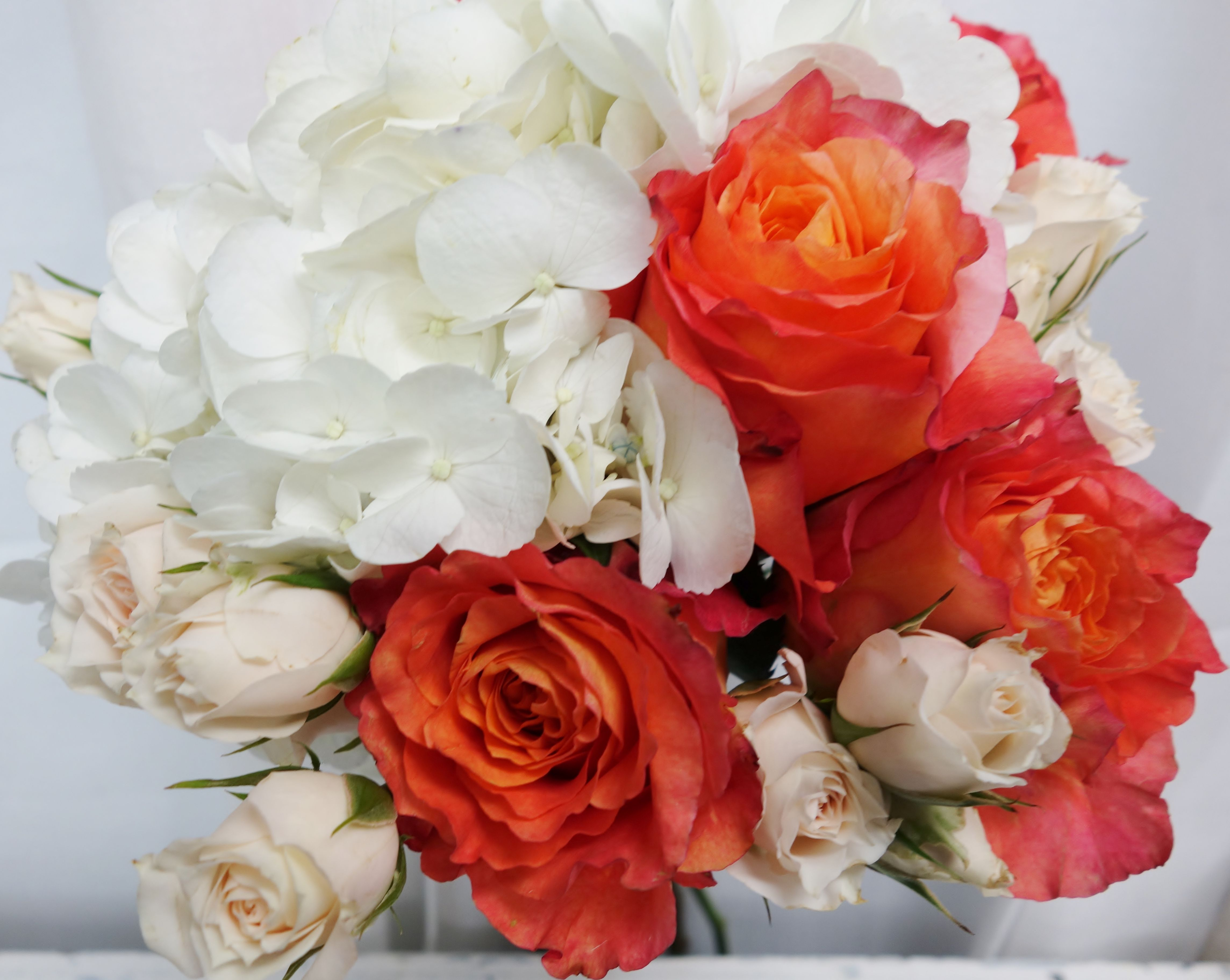 Free Spirit roses Flowers, Rose, Plants