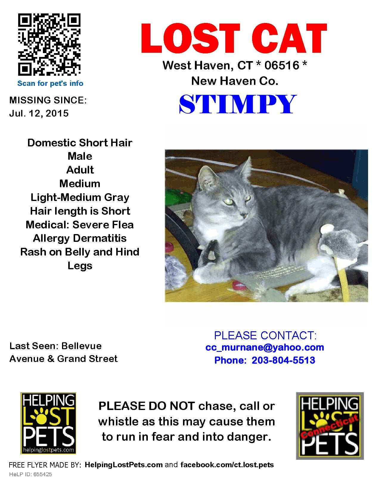 Optionssharesendlike Photos Of Ct Lost Pets Catherine Murnane Ct Lost Pets July 24 My 7 Year Old Male Cat Stimpy Ran Out My Back Lost Cats Ct Losin