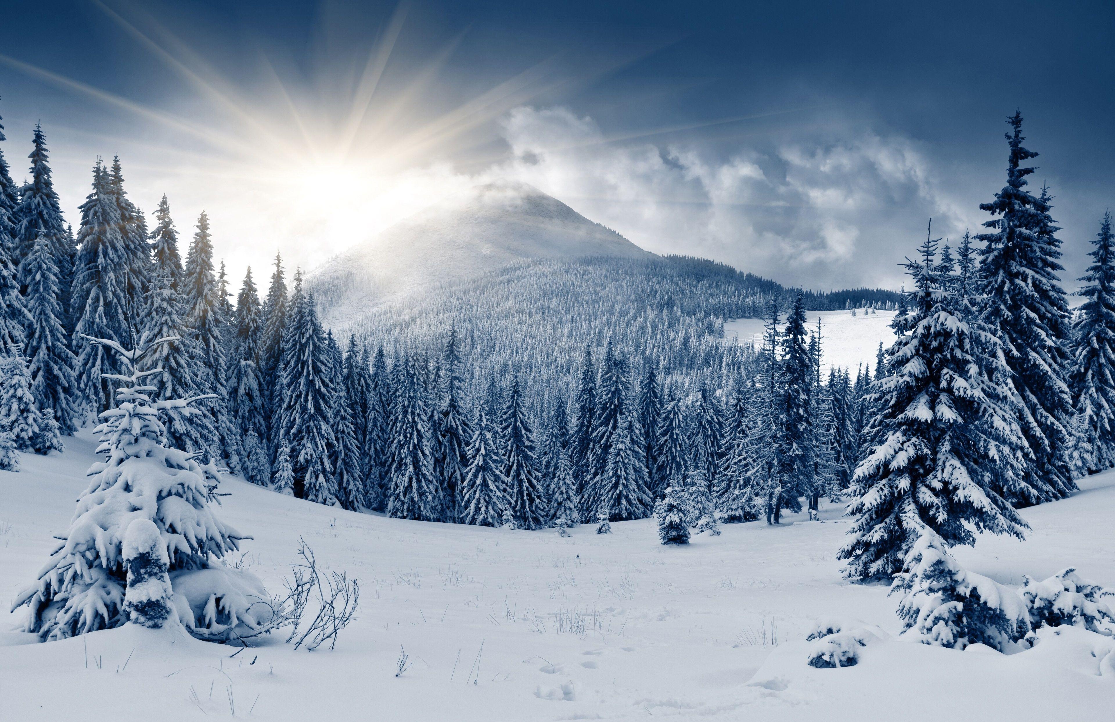 3840x2485 winter forest 4k free desktop wallpaper Зимние